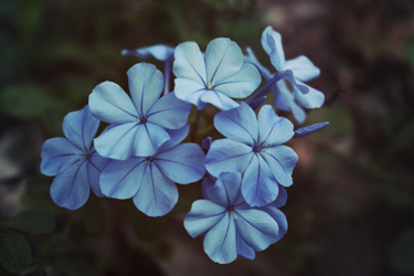 blue bounty