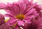 bloom by Nimbue