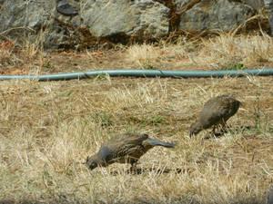 Group feeding