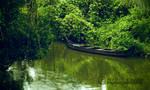 Green World - viewfinder 0040