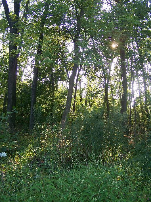 Herbal forest by HarvestPicori