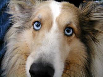 Rocky The Dog by symonx