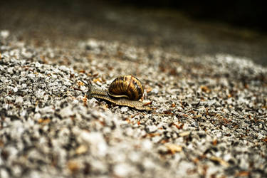 Snail On The Road by Peter-Vrab