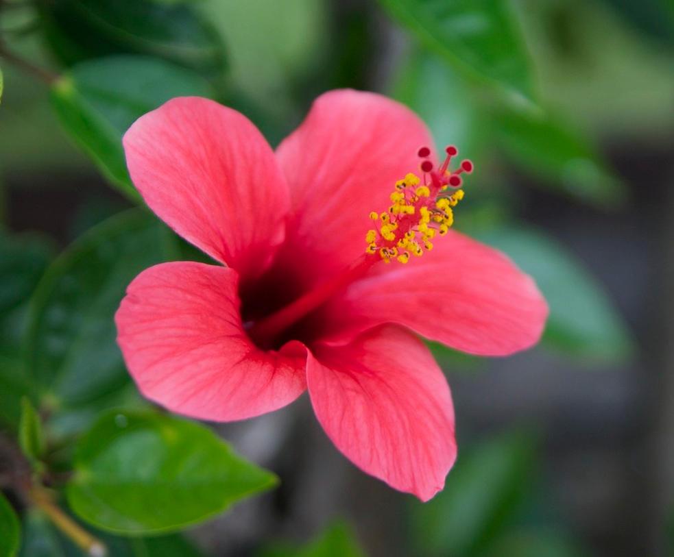 Flower by Navvyblue