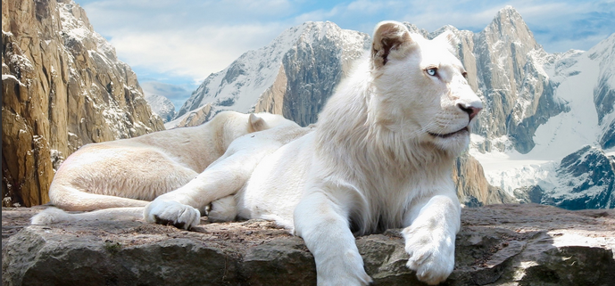 White Lions by DOLL00132