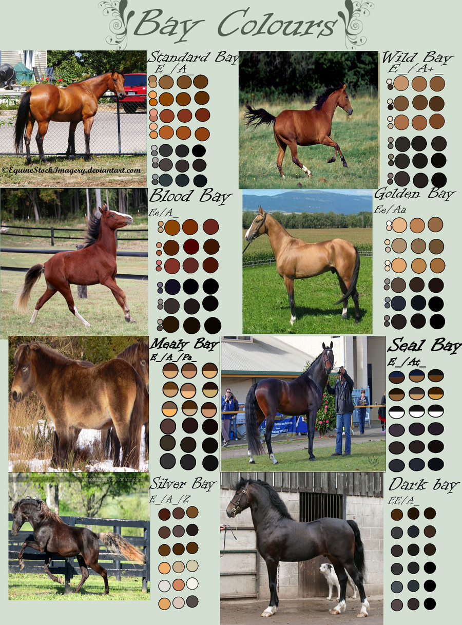 Bay Horse Colours by EdithSparrow