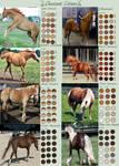 Chestnut Horse Colours