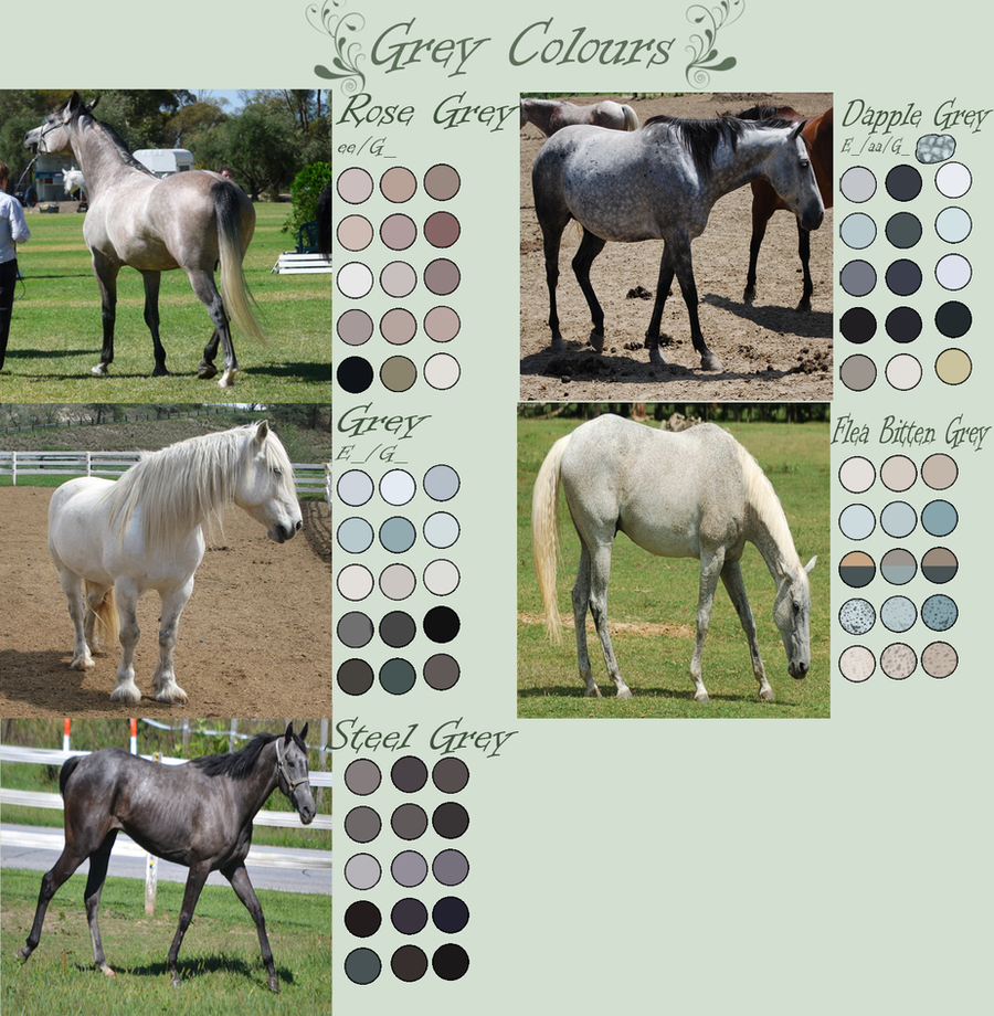 Grey Horse Colours by EdithSparrow