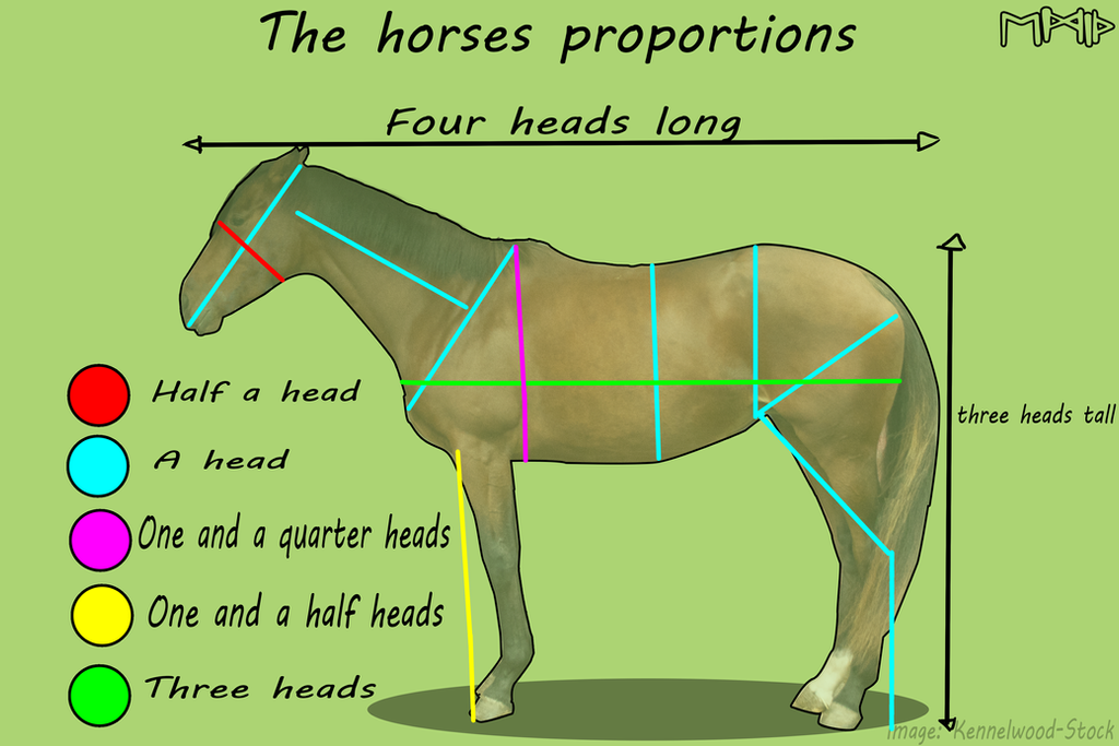Anatomy and Physiology on Equine-Art-Reference - DeviantArt