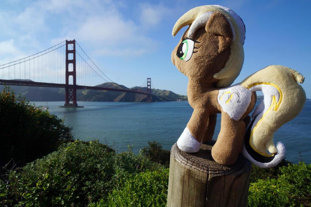 Unity at Golden Gate Bridge, San Francisco by Cabraloca