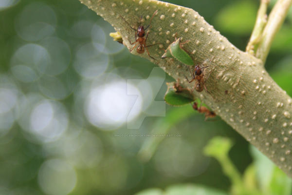 hormiguitas by photocardiograph on deviantart