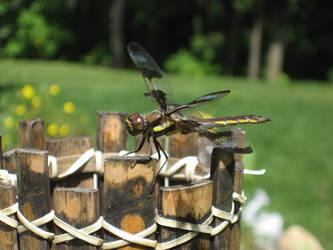 Eew a bug by Shimmergloom