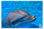 The Portrait of a Dolphin by Gryphonia
