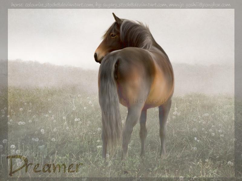 Dreamer by ladykraut