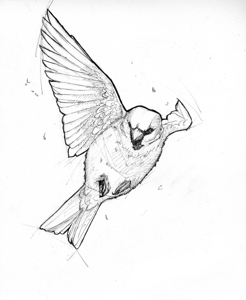 Sparrow - Ink by Bluecrow10 on DeviantArt