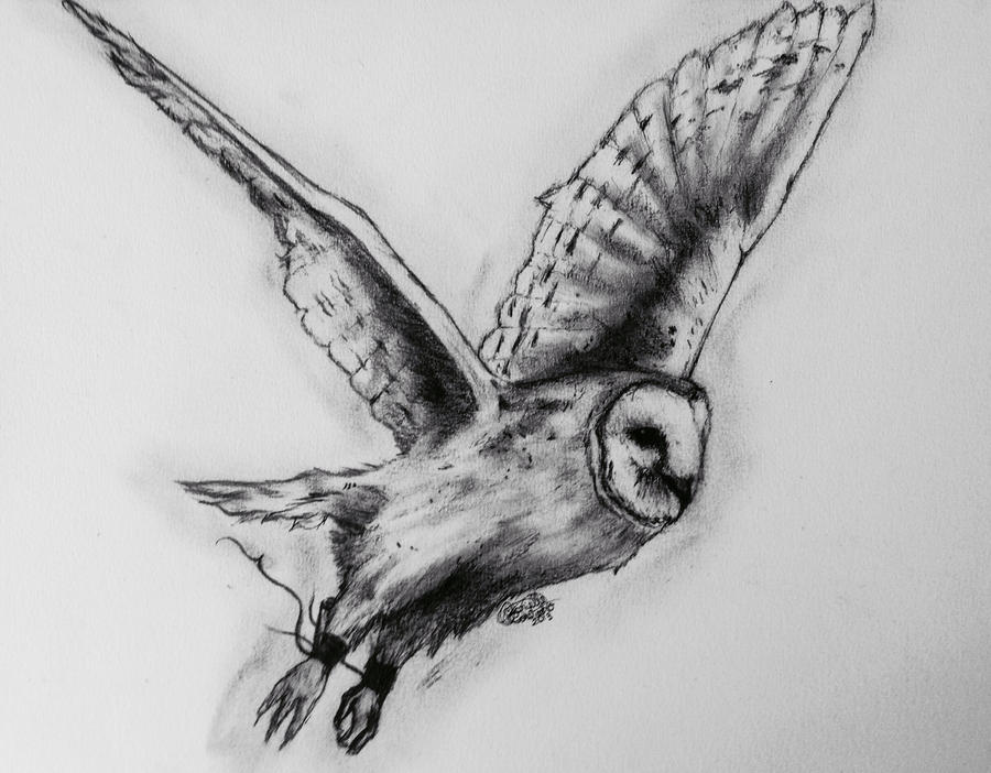 barn owl by gabriellec drawings