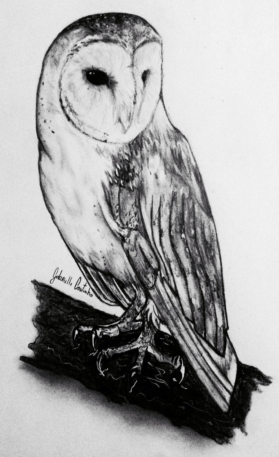 Black And White Barn Owl Photography