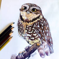 Cute Owl by GabrielleC-Drawings
