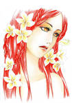 - Sena-Re  with Frangipani Flower -