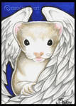 Angel Ferret In Blue