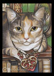 Bejeweled Cat 3
