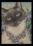 Bejeweled Cat 9