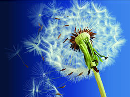 Dandelion Seeds by dootless