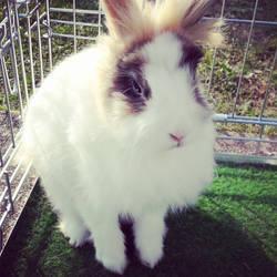 My handsome bunny
