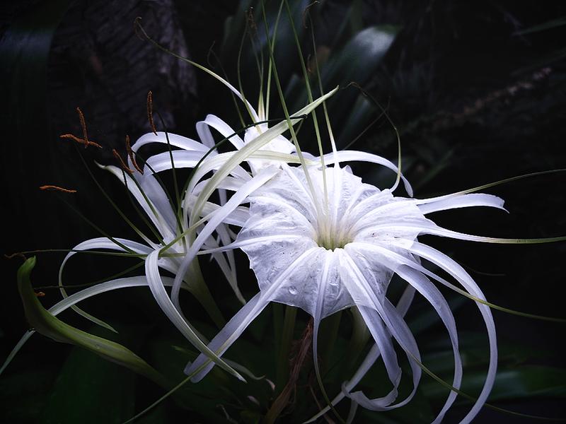 white star by Mina7