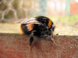 Bee Stock by Its-Only-Stock