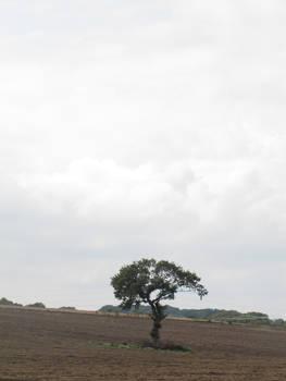 tree in field 1 - 2014