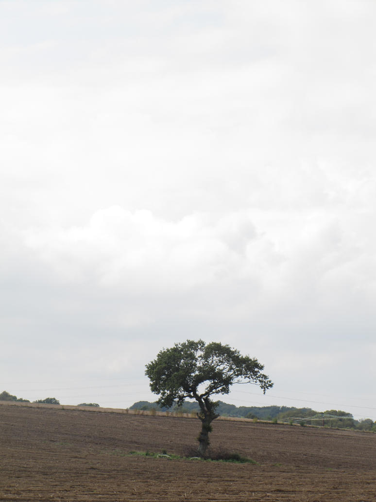 tree in field 1 - 2014 by Its-Only-Stock