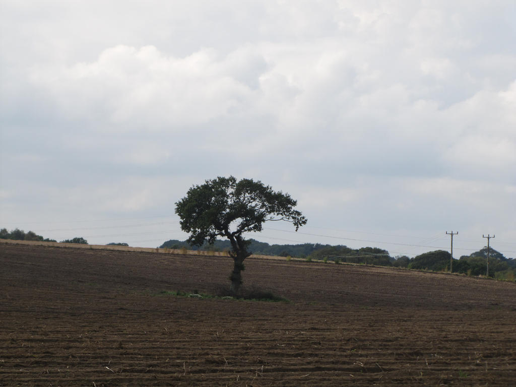 tree in field 2 - 2014 by Its-Only-Stock