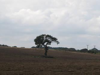 tree in field 2 - 2014