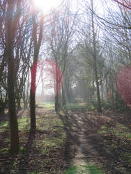 Trees and rays 1