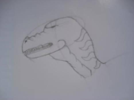 t-rex head study