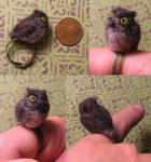 angry owl ring