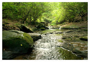 Forest Stream on the Rocks by LightofNuitari