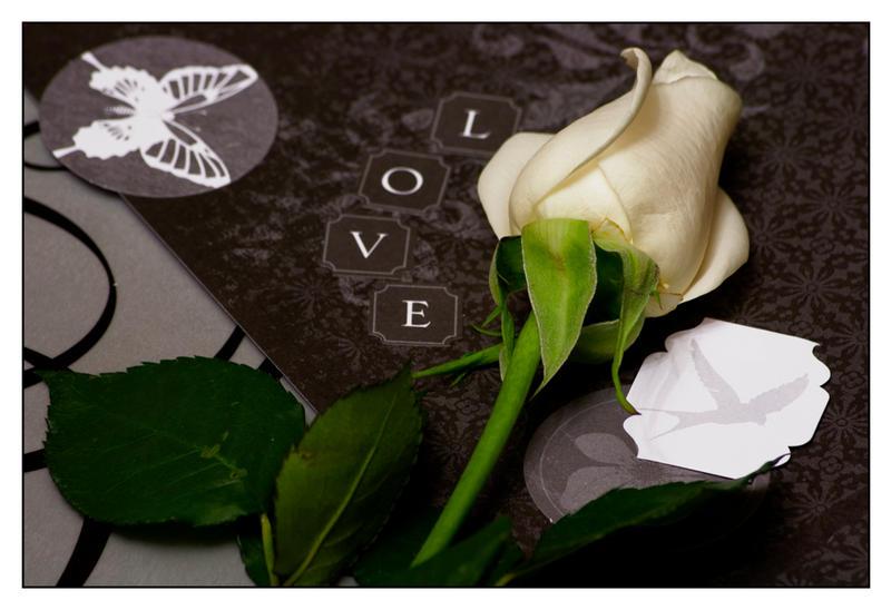 Rose for Love by LightofNuitari