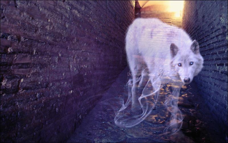 Woven Spirit by raqinq