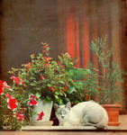 Le chat blanc by onechristina