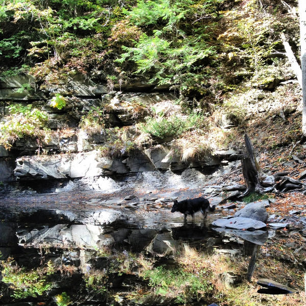 Reflection by herdingmutt