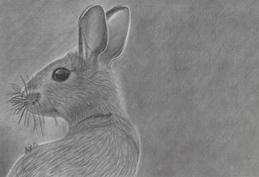 Realistic Rabbit Drawing (Prints in description) by AlmightyBhunivelze