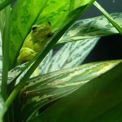Sleepy Frog by ellessilver