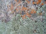 Lichen + Rock I