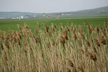 The Fields by SFeraSF