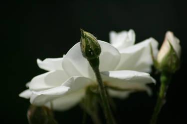 purity birth by SFeraSF