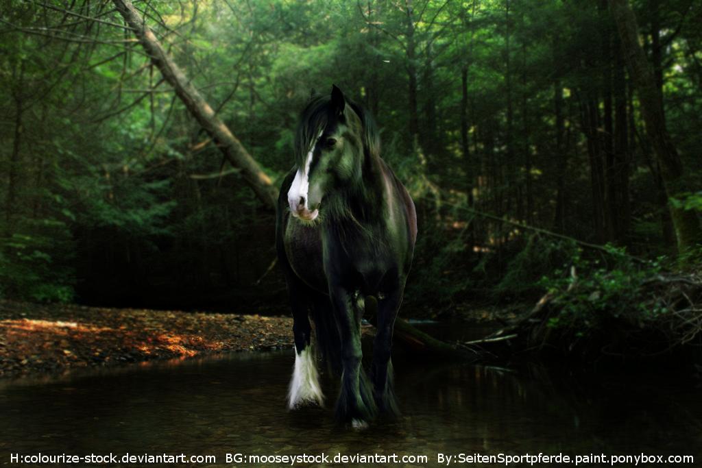 Draft Horse Custom