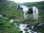 Paint horse manip
