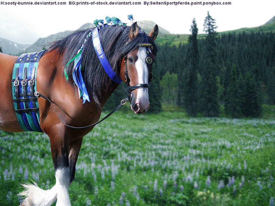 Clydesdale Horse Picture